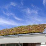 Groendak voor bijna alle daken
